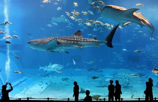 большой аквариум в ЮАР