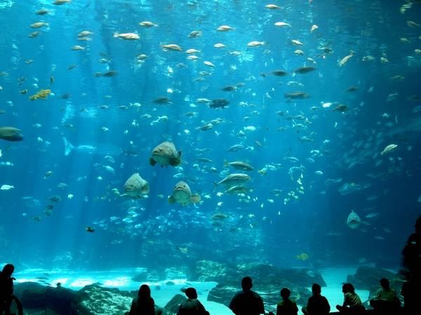 Океанариум в Атланте, США.