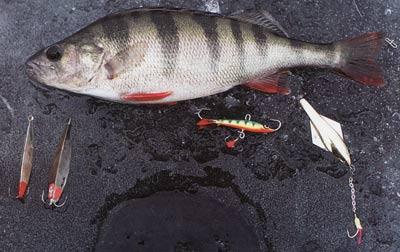 рыбалка на зимнюю удочку