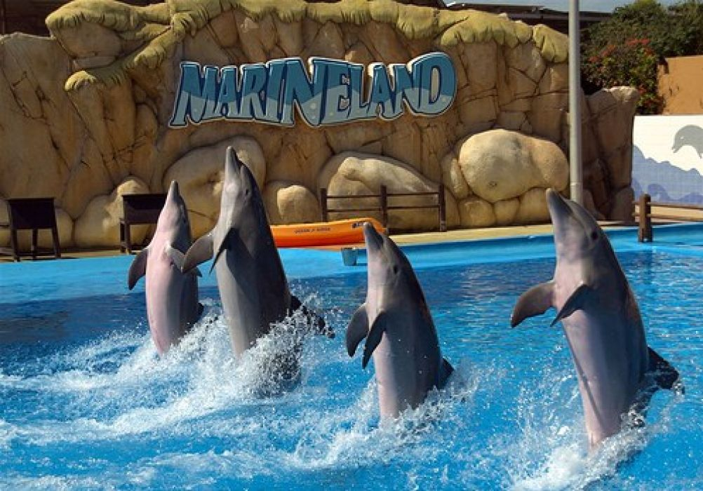 Аквапарк, дельфинарий и зоопарк Маринеленд