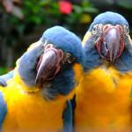 Парк Попугаев на Тенерифе