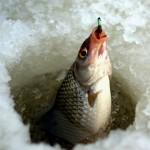 Рыбалка на зимнюю удочку.