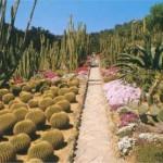 Ботанический сад Пинья-де-Роса в Бланес